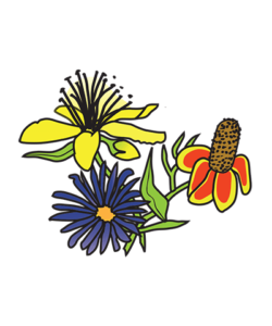 Placeholder image of the Wildflower Church logo