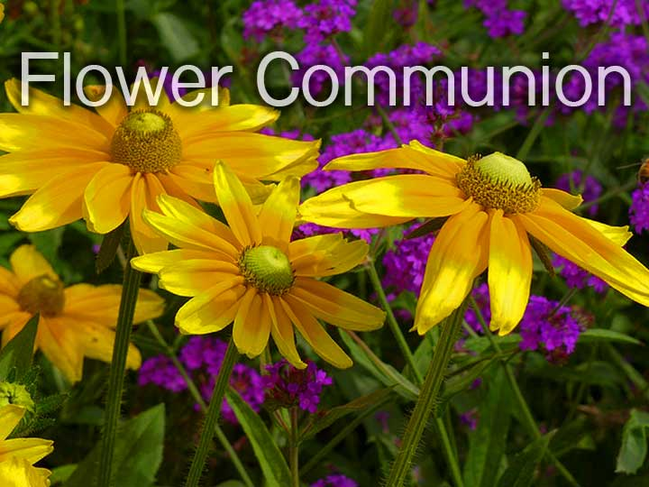 Our Unitarian Universalist Flower Communion: Celebrating Diversity